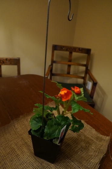 Burlap covered plant centerpiece