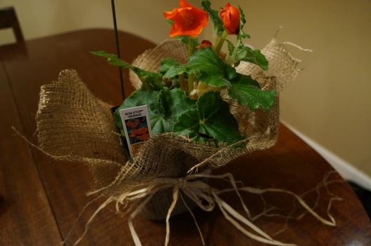 Burlap covered plant with bow