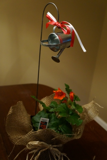 Burlap covered begonia with watering can